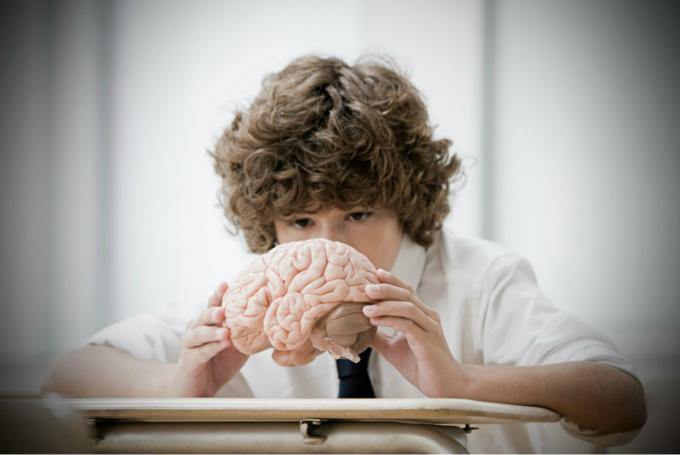 Taller 'El cerebro' en Parque de las Ciencias (Granada)