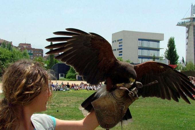 Taller 'Rapaces en vuelo' en Parque de las Ciencias (Granada)