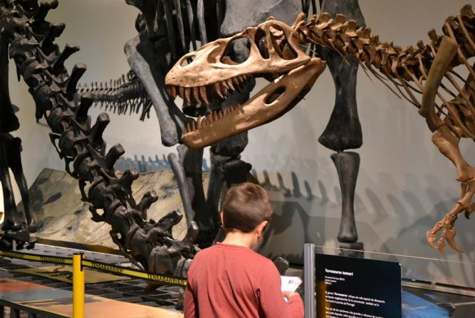 Taller 'Paleontólogos y dinosaurios' en Museo Nacional de Ciencias Naturales (Madrid)