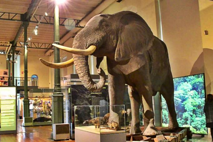 'Investiga con tu hijo: Dinosaurios' en Museo Nacional de Ciencias Naturales (Madrid)