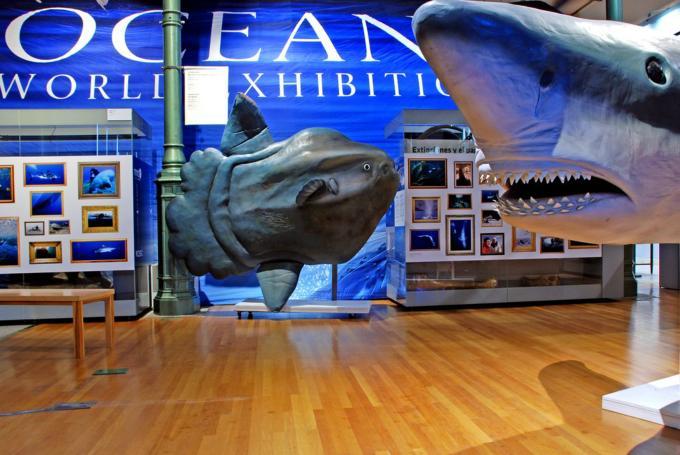 Océanos: La exposición. El último territorio salvaje.  en Museo Nacional de Ciencias Naturales (Madrid)