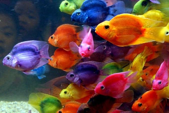 Taller 'Explosión de colores' en Aquarium de Barcelona (Barcelona)