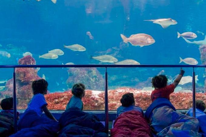 'Dormir entre tiburones' en Aquarium de Barcelona (Barcelona)