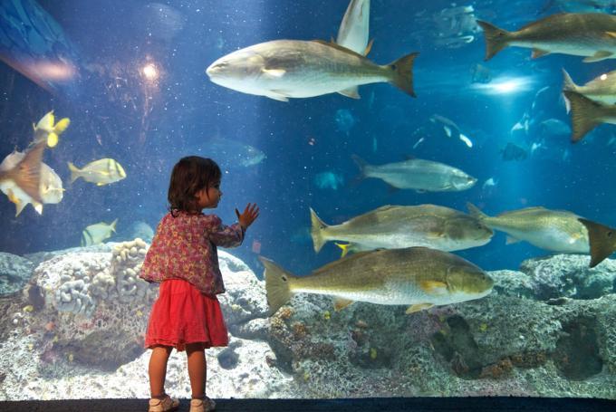 Taller infantil de fin de semana en Aquarium Finisterrae (A Coruña)